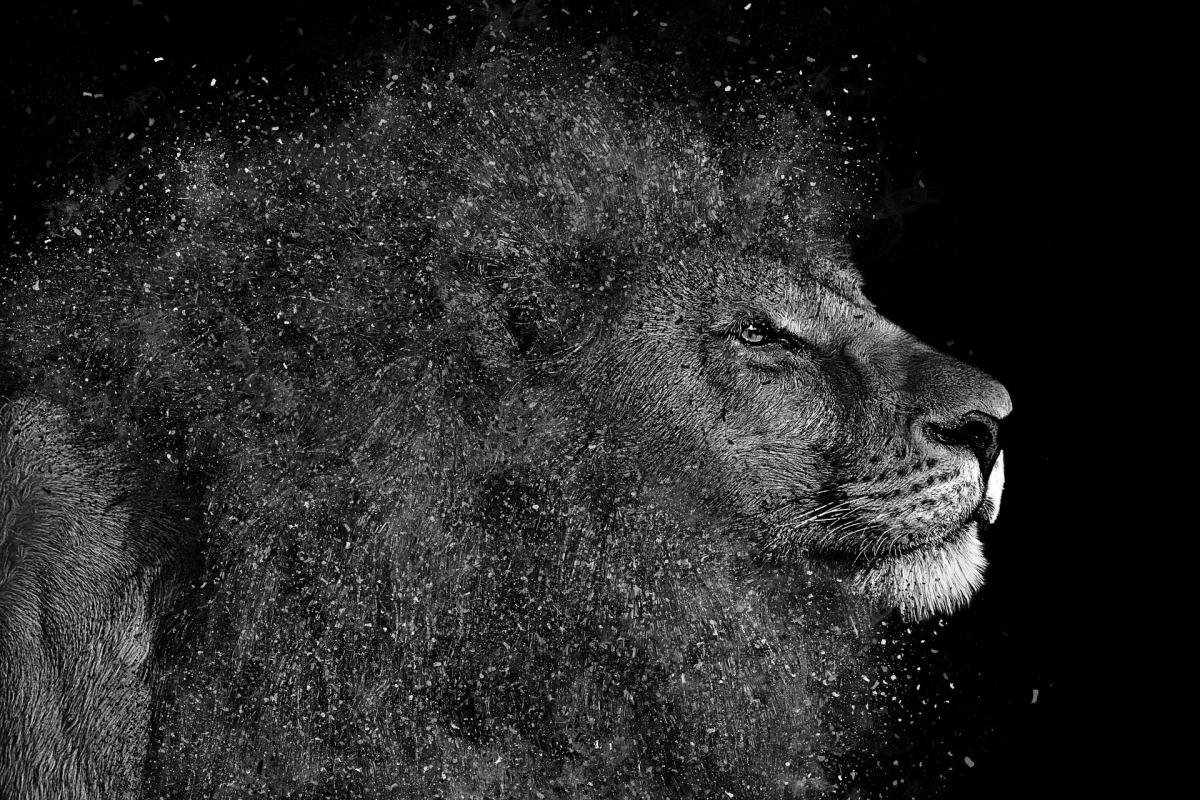 lion-1987792_1920_sw